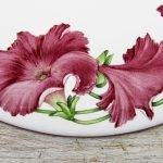 detail of burgundy petunia flower