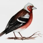 chaffinch bird hand painted on porcelain personalized house signs